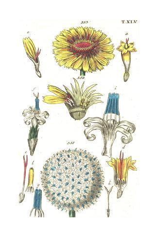 Botanical Illustrations of Flower Blossoms Art Print