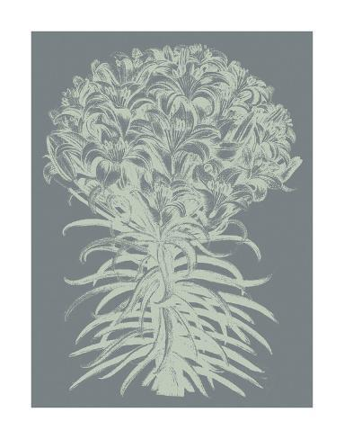 Lilies 7 Art Print