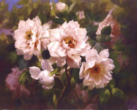 Full Blossom II Art Print