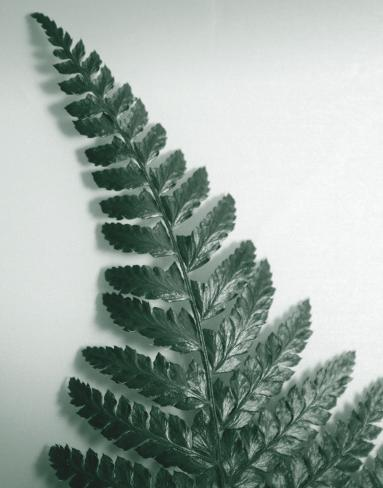 Fern Leaf I Stampa su tela
