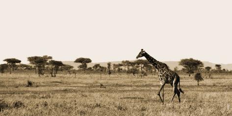 Serengeti Horizons II Art Print