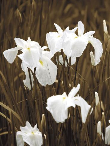 Spring Blossoms I Pingotettu canvasvedos