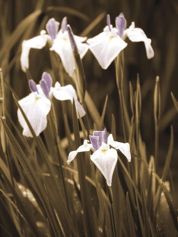 Spring Blossoms II Pingotettu canvasvedos