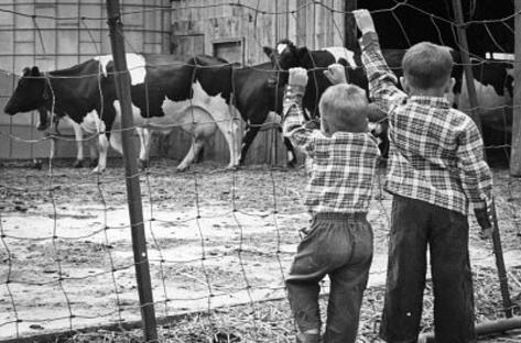 Boys at Cow Farm Archival Photo Poster Print Masterprint