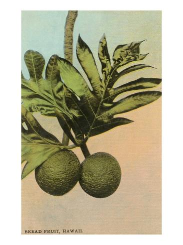 Bread Fruit, Hawaii Art Print