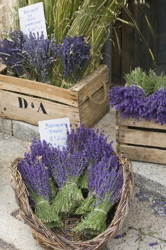 France, Provence, Sault. Bunch of Cut Lavender for Sale at a Shop Stampa fotografica