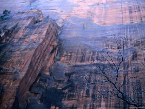 Sheer Rockface Above the Upper Emerald Pool Trail, Zion National Park, Utah Photographic Print