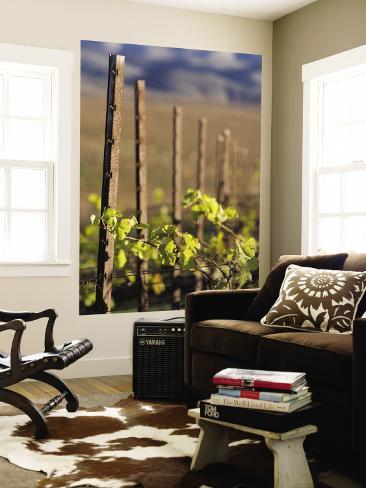 Vines in Winter at Carmel Road's Valley View Vineyard Wall Mural