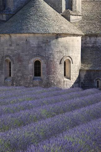 Rows of Lavender, Abbaye De Senanque, Gordes, Luberon, Provence, France Photographic Print