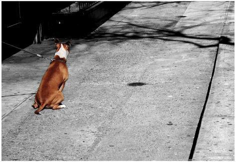 Brown & White Dog on Black & White Street Poster