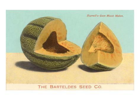 Burrell's Gem Musk Melon Taidevedos