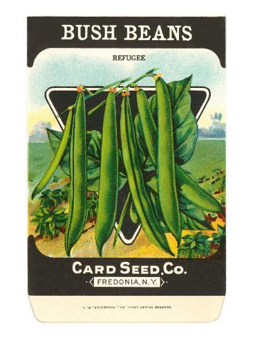 Bush Bean Seed Packet Taidevedos