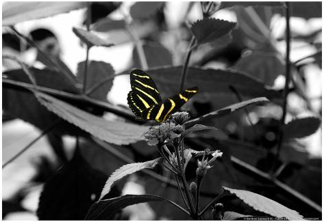 Butterfly at Bronx Zoo Poster