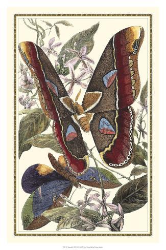 Butterfly II Giclee Print