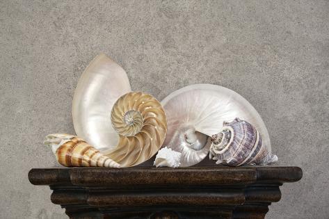Seashell Still Life I Impressão fotográfica