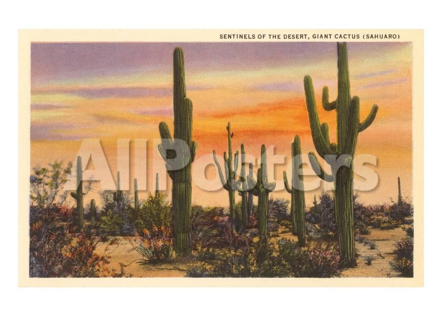 Cactus de Saguaro Láminas en AllPosters.es