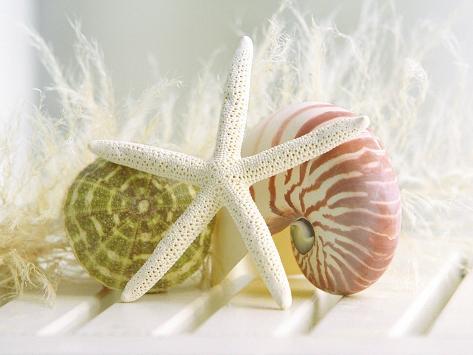 Cali Starfish III Premium Giclee Print