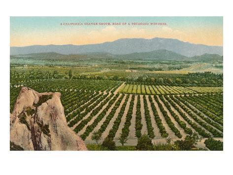 California Orange Grove Art Print