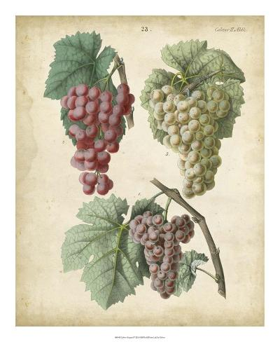 Calwer Grapes II Giclée-vedos
