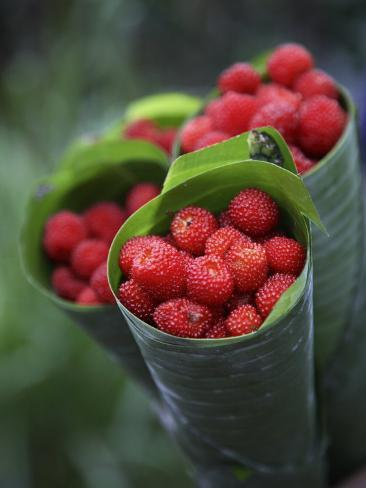 Wild Raspberries Held in the Leaf of a Porcelaine Rose, Sao Tomé and Principé Photographic Print