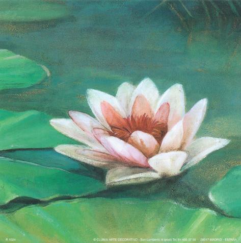 Waterlily II Art Print