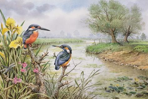 Kingfishers on the Riverbank Giclee Print