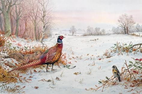 Pheasant and Bramblefinch in the Snow Giclee Print