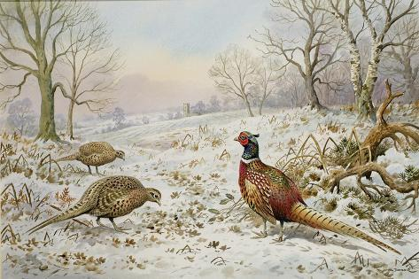 Pheasant and Partridges in a Snowy Landscape Giclee Print