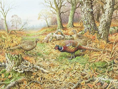 Pheasants with Blue Tits Giclee Print