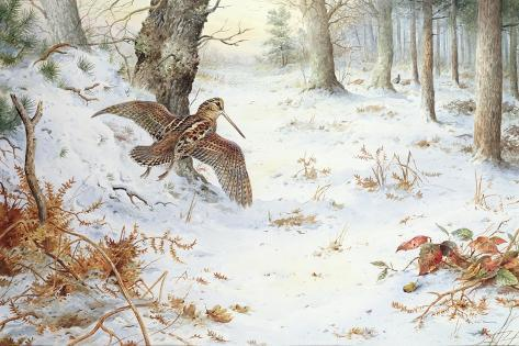 Snipe in Wooded Landscape Giclee Print