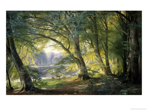 Forest Glade Giclee Print
