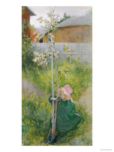Appleblossom, 1894 Lámina giclée