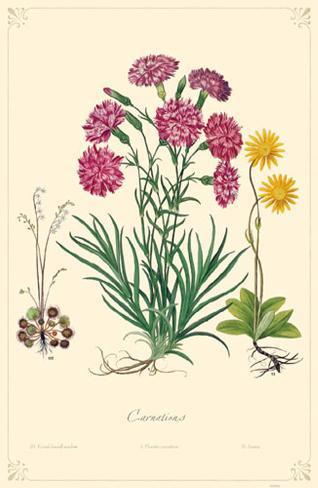 Carnation Flowers Masterprint