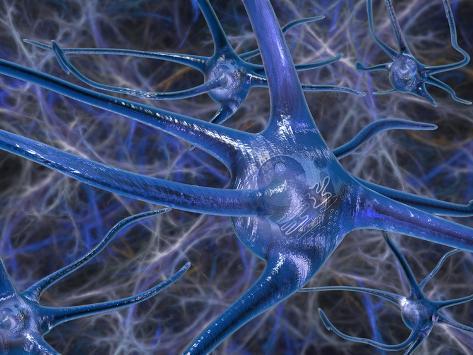 Biomedical Illustration of Neurons Photographic Print