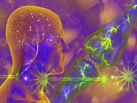 Concept of Electrical Activity in Neurons Electrical Impulses are Carried across the Synapse Photographic Print