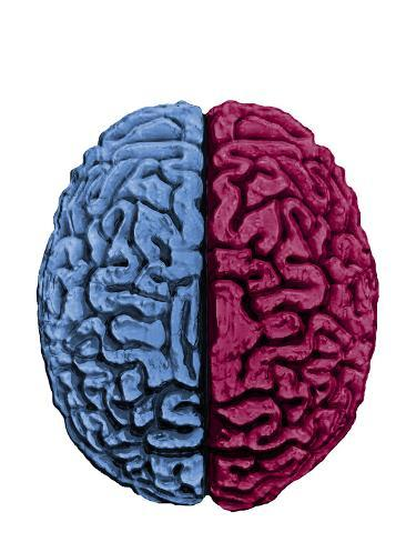 Illustration Showing the Attributes of Left and Right Brain Activity in Humans Photographic Print