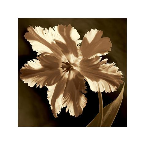 Parrot Tulip I Giclee Print