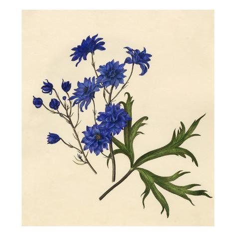 Dianthus caryophyllus: Gardenia jasminoides Giclee Print