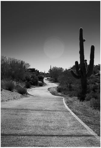 Cart Path on Desert Golf Course Arizona Poster