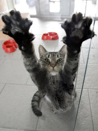 Boxing Cat Films Address