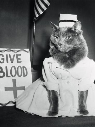 Cat Wearing Nurse Uniform Photographic Print