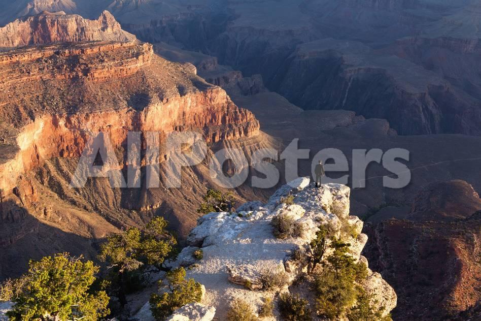 オールポスターズの catharina lux usa grand canyon national park