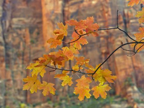 Zion National Park, Utah, USA Photographic Print