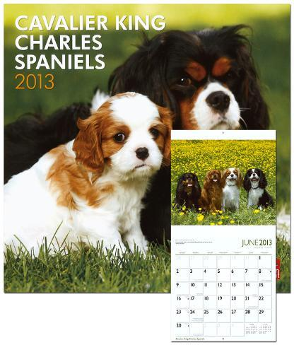 Cavalier King Charles Spaniels - 2013 Wall Calendar Calendars