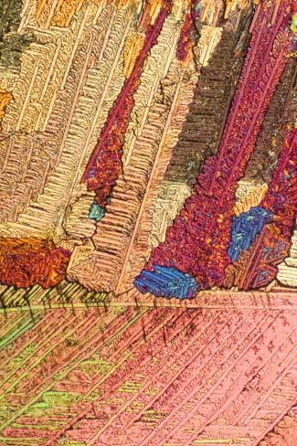 A Photomicrograph, a Picture Taken Through a Microscope, of Urca Photographic Print