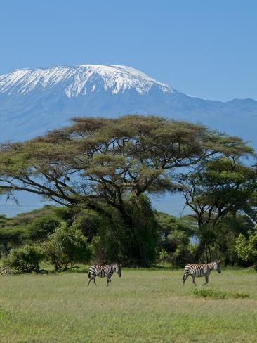 Zebra, Amboseli National Park, With Mount Kilimanjaro in the Background, Kenya, East Africa, Africa Photographic Print