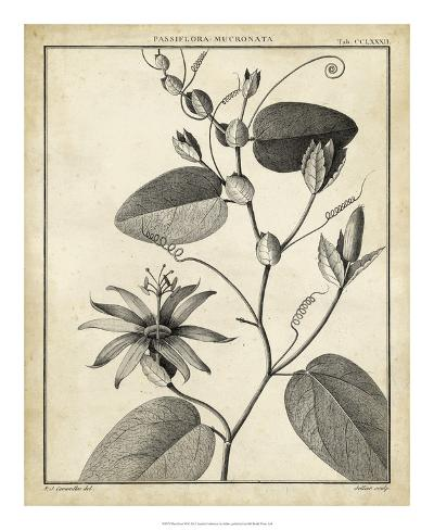 Passiflora VI Giclee Print