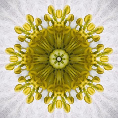 Kaleidoscope of Clematis flower Photographic Print