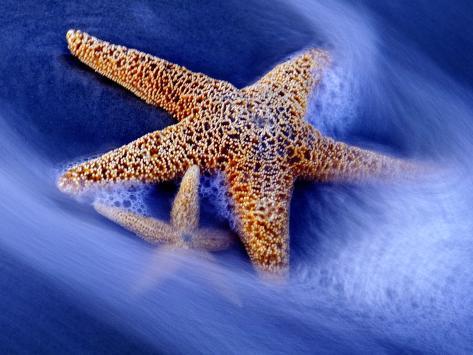 Two Starfish on Beach, Hilton Head Island, South Carolina, USA Photographic Print