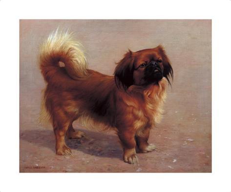 Small Dog Premium Giclee Print
